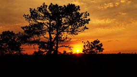 树和云彩在日落 库存照片