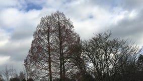 树和云彩时间间隔 股票录像