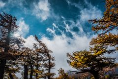 树和云彩风景与天空蔚蓝,看法从富士斯巴鲁线第5个驻地 库存照片