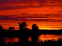 树和令人惊讶的多云天空黑暗的剪影照片在日落在夏天 免版税库存照片