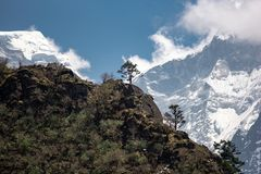 树和冰川在尼泊尔 库存图片