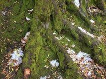 树和冰 免版税库存图片