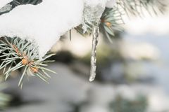 树和冷杉木 免版税库存照片