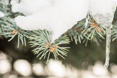树和冷杉木 图库摄影