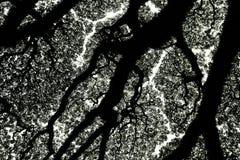 树和分支剪影 库存图片