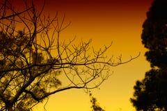 树和分支-不同的看法深色变异 免版税库存图片