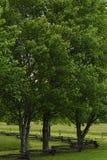 树和分裂路轨操刀 库存照片