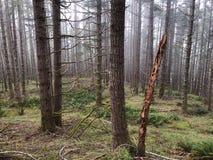树和刷子在森林山 免版税库存图片
