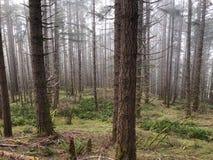 树和刷子在森林山 免版税库存照片