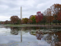 树和华盛顿纪念碑的秋天反射 免版税库存图片