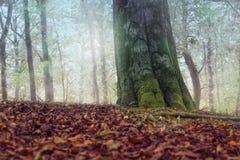 树和叶子在秋天期间的森林里 图库摄影
