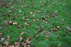 树和叶子在秋天 免版税库存照片