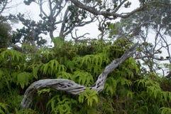 树和叶子在Kalalau监视,考艾岛 免版税库存照片