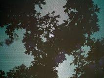 树和叶子的阴影 库存图片