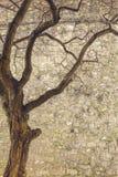 树和城堡墙壁 免版税库存图片
