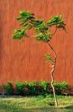 树和墙壁 免版税库存照片