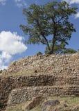 树和墙壁2 免版税库存照片