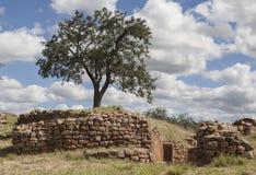 树和墙壁 免版税库存图片