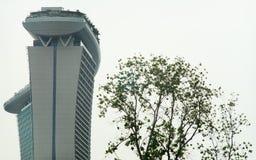 树和大厦 库存图片