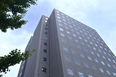 树和大厦 免版税库存图片