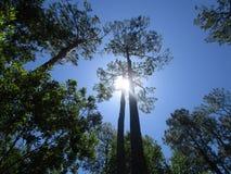 树和天空和太阳 免版税库存照片