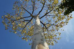 树和天空在秋天 免版税库存图片