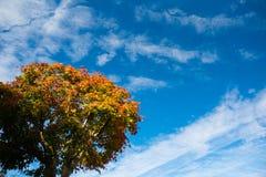 树和天空在秋天 免版税库存照片