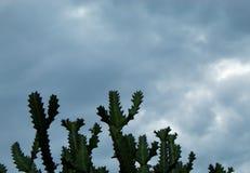 树和天空在雨和阴云密布以后 库存照片