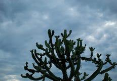 树和天空在雨和阴云密布以后 免版税库存照片