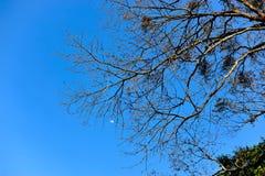 树和天空自然地发生 在nat公式化的绿色和蓝色 库存照片