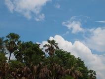 树和天空,秀丽本质上 免版税库存图片