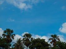 树和天空,秀丽本质上 库存照片