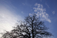 树和天空 库存图片