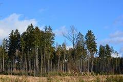 树和天空 图库摄影