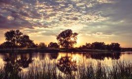 树和太阳在河的镜子被反射 库存照片