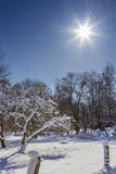 树和太阳在雪 库存照片