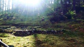 树和太阳的组合 免版税库存照片