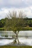 树和它的反射 免版税库存图片
