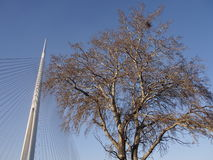 树和定向塔 免版税图库摄影
