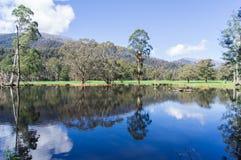 树和小山在湖反射了在马里斯维尔,澳大利亚附近 库存图片