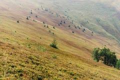 树和小山美丽的景色在山,夏天墙纸 免版税库存图片