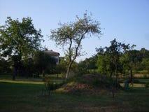 树和小山 库存图片