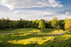 树和小径在领域 免版税库存照片
