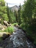 树和小河在洛矶山国家公园 图库摄影