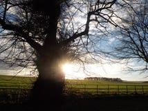 树和小灌木林 库存图片