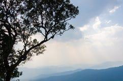 树和山与很多云彩在chaingmai泰国 免版税图库摄影