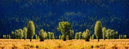 树和山腰 免版税库存照片