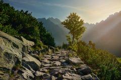 树和山道路在一个晴朗的早晨 免版税库存图片