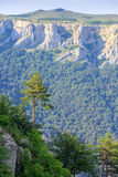 树和山 库存照片