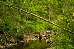 树和岩石在水中在黑河狼吞虎咽 免版税库存图片